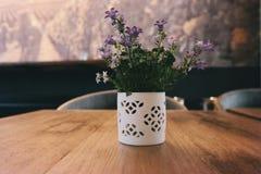Blur, Close-up, Colors, Flora stock image