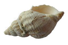 Blur, Close-up, Conch stock images