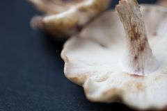 Blur, Close-up, Cooking Royalty Free Stock Photos