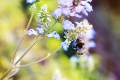 Blur, Close-up, Delicate stock photo