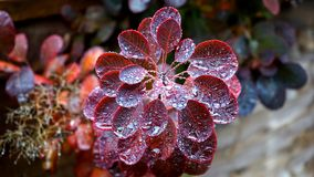 Blur, Close-up, Dew Stock Photo