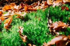 Blur, Close-up, Dried Royalty Free Stock Photos