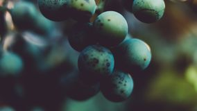 Blur, Close-up, Exotic Stock Photography