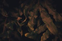 Blur closed up green leaf background. Selective focus closed up tropical summer green gold autumn season leaf background with dark color tone stock photos
