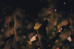 Blur closed up green leaf background. Selective focus closed up tropical summer green gold autumn season leaf background with dark color tone royalty free stock images