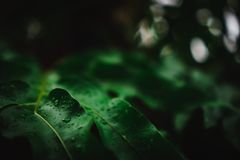 Blur closed up green leaf background. Selective focus closed up tropical summer green leaf background with sunlight stock photos