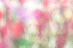 Blur colorful texture from flower Royalty Free Stock Images