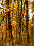 Blur colours of autumn forest 1. Blur colours of autumn forest with unsharp leaves and trunks of trees by zooming Stock Photo