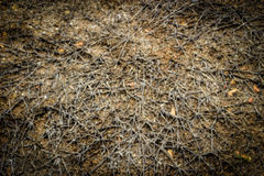 Blur dry root on ground. For background Royalty Free Stock Image