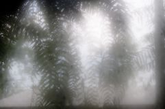 Blur fern leaves in fog. Burred fern leaves shot in fog shot through fogged windows after rain Stock Photos