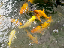 Blur fish in water. Fish in the water blurred image As background Royalty Free Stock Photos