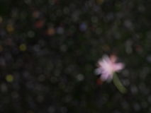 Blur flowers  falling on dark green moss floor Royalty Free Stock Images