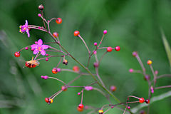 Blur Flowes Stock Photo