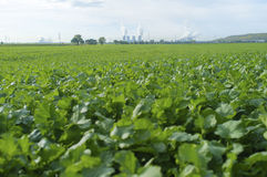The blur foreground green vergetable field with nuclear power pl Stock Images