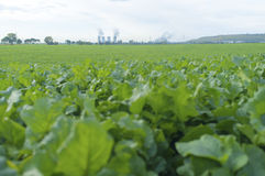 The blur foreground green vergetable field with nuclear power pl Royalty Free Stock Photography