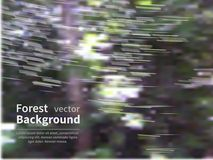 Blur forest Royalty Free Stock Image
