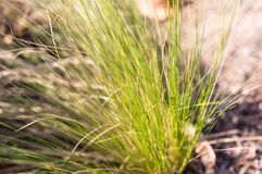 Blur grass in park with sunshine, blur.  Stock Images