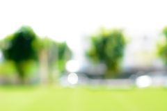 Blur green background from lawn & trees in the garden Stock Photography