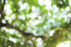 Blur of green bokeh Stock Image