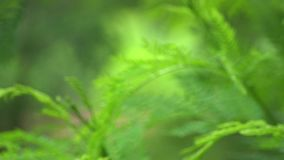 Blur of green branch. Background with the hard wind in shortly time stock video