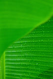 Blur green foreground and green banana leaf. Texture for background Stock Photos