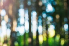 Blur Green Forest royalty free stock images