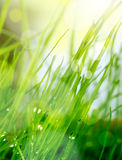 Blur green grass background Royalty Free Stock Photography