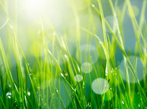 Blur green grass background Royalty Free Stock Image