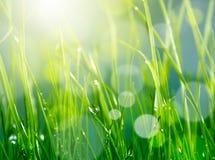 Blur green grass background. Soft blur green grass background Royalty Free Stock Image