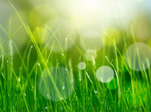 Blur green grass background Royalty Free Stock Photo