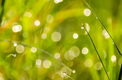 Blur green grass background Stock Photography