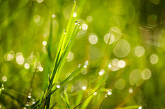 Blur green grass background Royalty Free Stock Images