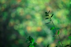 Blur of green leaves pattern for concept of summer or spring season. background bokeh texture. royalty free stock images