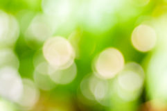 Blur green nature background Stock Photography