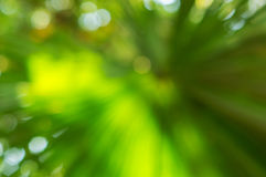 Blur green nature background Royalty Free Stock Photos