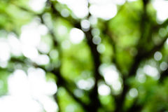 Blur green tree background Stock Photos