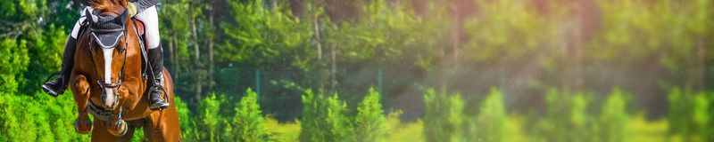 Horizontal photo banner for website header design. Sorrel horse and rider in uniform during showjumping competition. Blur green trees and sun rays as background Royalty Free Stock Photo