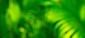 Blur greenery leaf in forest.Nature background stock photography