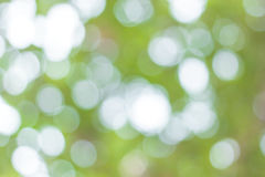 Blur image of Abstract Bokeh of tree green color Stock Photo