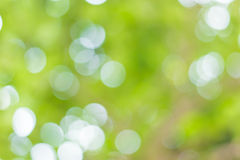 Blur image of Abstract Bokeh of tree green color Stock Images