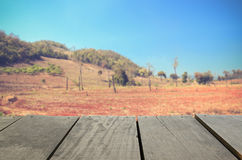 Blur image of agriculture Deforestation in the mountain. Defocused and blur image of agriculture Deforestation in the mountains for background usage Royalty Free Stock Photo