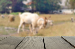 Blur image of agriculture Goat in meadow for background. Defocused and blur image of agriculture Goat in meadow for background usage Stock Photo