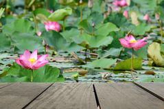 Blur image of terrace wood and beautiful pink flower lotus in pond. Defocused and blur image of terrace wood and beautiful pink flower lotus in the pond for Royalty Free Stock Photos