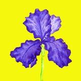 Blur iris, painting Stock Images