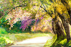Blur landscape walkway in beautiful park for background Royalty Free Stock Image