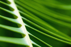 Blur leaves palm Royalty Free Stock Image