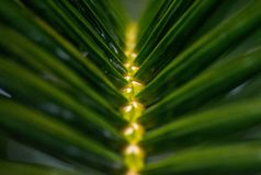 Blur the leaves of palm trees royalty free stock photography
