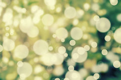 Blur light bokeh with blur tree in background. Abstract backgrou. Nd Stock Photo