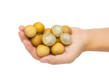Blur longan on hand. With white background Stock Photos