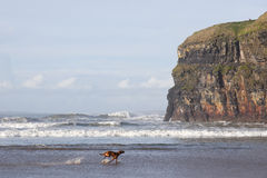 Blur motion of dog running by cliffs Royalty Free Stock Photo